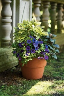 Pot-container-gardening-213x320